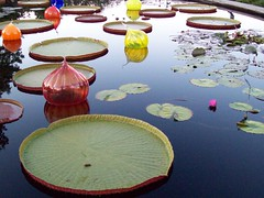 lake with glass bulbs (hippiecat) Tags: pink red lake flower green water glass yellow lily lotus lilies chihuli missouribotanicalgarden
