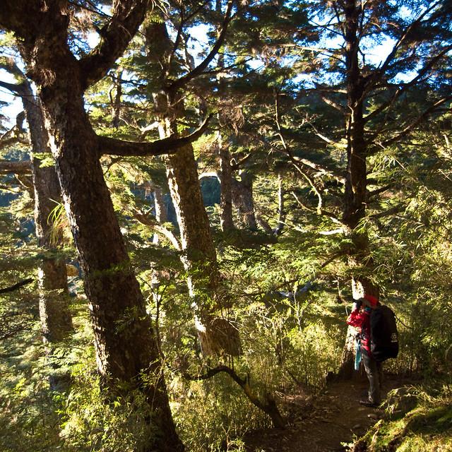 2008.11.14 嘉明湖登山行
