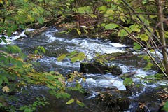 feuilles et ruisseau (rariflora) Tags: autumn trees water leaves norway automne norge eau blad arbres porsgrunn fort vann feuilles hst trr norvge klyve bestflickrphotography
