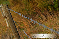 Got all your shots? (Chrissy Avila Photography (cHrIsSy1554)) Tags: fence florida barbedwire okaloacoocheesloughstateforest ©csquaredphotography chrissy1554 ©christinaavilaphotography ©chrissyavilaphotography wwwchrissyavilaphotographycom