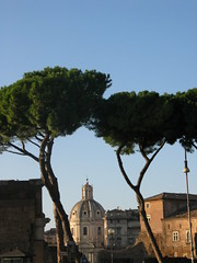 Cool trees (Harobed and Samoht) Tags: stpeters rome roma sanpietro