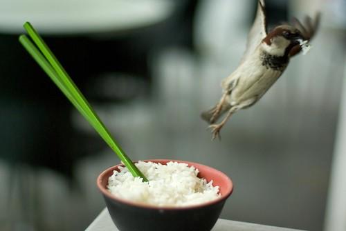 Rice Raider