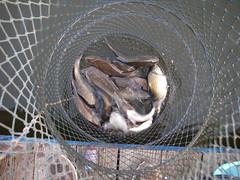 惨憺たる釣果