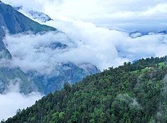 Misty Vales of Uttranchal (Himalayan Trails) Tags: india mist ski mountains clouds landscape oak resort skiresort rhododendron himalayas auli potofgold uttranchal deodar himalayantrails goldstaraward