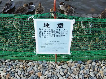 鳥除けのネット~大池