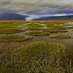 Hvítárnes wetlands