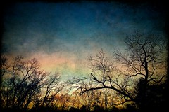 December Sunset (jhary) Tags: trees sunset home georgia death backyard macon tectures december2008