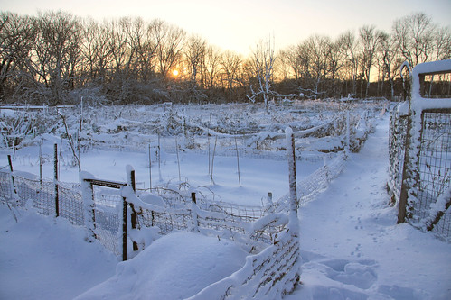 community gardens in the snow