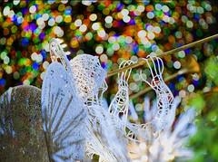 (Tony Shi Photos) Tags: nyc newyorkcity angel america colorful bokeh christmastree instrument         nikond700    thnhphnewyork  tonyshi rockefellercenterplazaconcourse