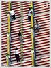 Photo Poses (Yug_and_her) Tags: travel people lines horizontal architecture stairs temple candid steps posing tourists diagonal malaysia kualalumpur visitors hindu batucaves murugan pilgrims pcasteps