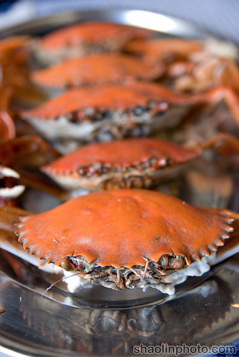 Fresh Mud Crab