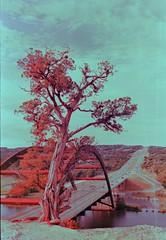 360 Bridge (The 4/30 Murders) Tags: film analog austin xpro rangefinder crossprocessing fujifilm canonet velvia100f 360bridge canonetgiiiql17 diycolor diyxpro