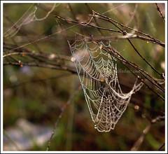 The Jewels ($udhakar) Tags: nature beauty closeup iso200 dewdrops pattern dof artistic bokeh web hexagonal spiderweb cobweb dew jewels weaving hpc f35 primelens 1750s smcpa50mmf17 justpentax pentaxk100dsuper wwwsudhakarcom hexagonalbokeh