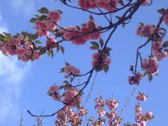 Beleza de todos os anos (Irene Sarranheira) Tags: cidade baby flores girl amor carinho rosa convento beleza mafra delicadeza passoapasso