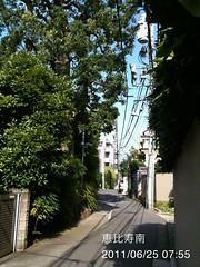 朝散歩(2011/6/25)