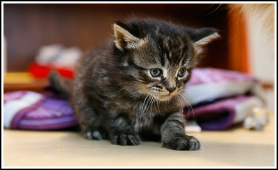 Kittie at 4 weeks old copy