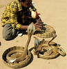 Charming Cobras 2