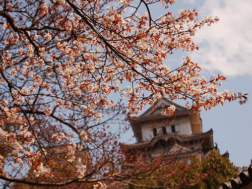 Cherry blossom at the Himeji Castle I