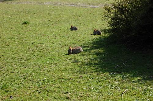 ついにウサギ激写!