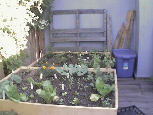 2001 garden