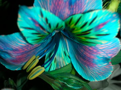 Es de verdad aunque no parezca. (Cristina Bruseghini de Di Maggio) Tags: flor explorewinnersoftheworld