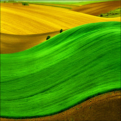 Pannonian sea (Katarina 2353) Tags: plants mountains green fall film nature grass yellow fairytale landscape photography golden spring nikon waves peace image curves surreal style paisaje hills fantasy fields agriculture paysage priroda valleys photopainting tjkp pejza katarinastefanovic katarina2353 gettylicense serbiainspired