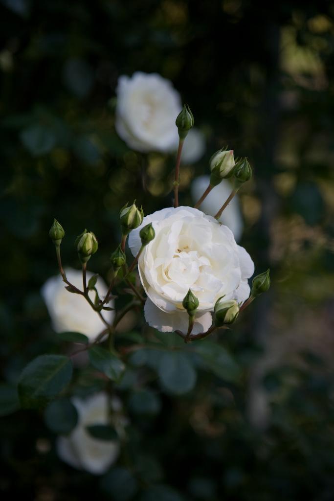 white_dawn1