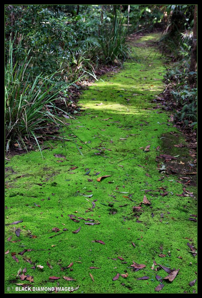 Raintrees Mossy Track