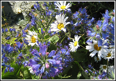 wildflowers copy