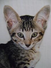Sascha's big ears