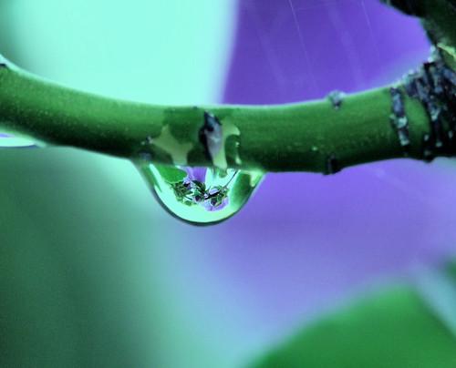 Water droplet - flower by Grezmel.