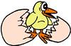 chick (3doel82) Tags: fish bird animals insect gambar koleksi ikan belajar burung binatang carnivora serangga mamalia amphibi
