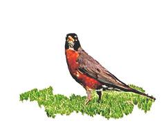 Summer Robin