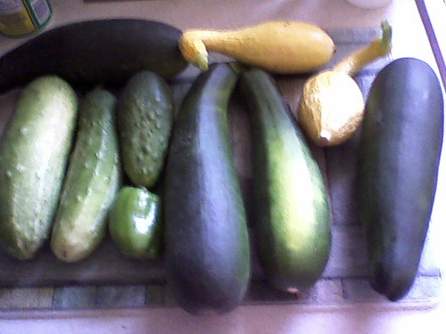 more crops! squash and such!