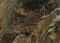 TMK5D0708 2961 (TLAfoto) Tags: naturaleza rio navarra salazar