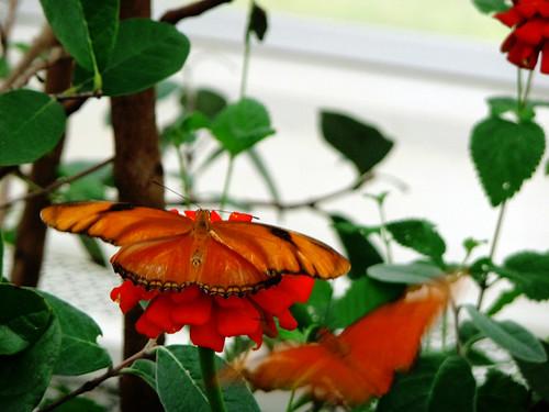 Butterfly Zone!