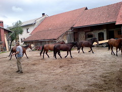 Kandare-farm (roelfina) Tags: vakantie dane 2008 slovenië