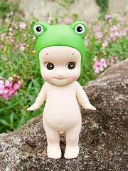 (singemily) Tags: frog f30 finepix fujifilm taipei  sonnyangel q
