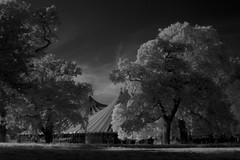 big top in the Phoenix Park Dublin July 26th 2008 [1] (Dave Road Records) Tags: ireland blackandwhite dublin infrared tomwaits phoenixpark