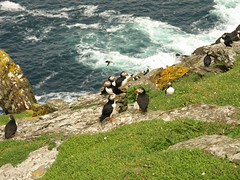 181. More Friendly Puffins. (Thomas Salgado) Tags: ireland skelligmichael e510 atlanticpuffin fraterculaarctica skelligislands olympuse510