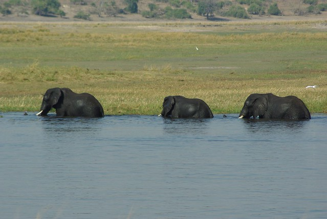 Caprivi Strip