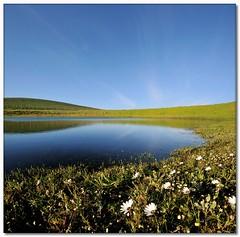 Meerendal Flower Dam (Vertorama) (Panorama Paul) Tags: dam wildflowers soe durbanville novideo nohdr shieldofexcellence goldenphotographer vertorama nikond300 meerendalwineestate