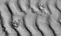 Honey228 (Plbmak) Tags: blackandwhite bw dog pet abstract cute texture beach puppy jack blackwhite mutt fuzzy russel honey jackrussel blackdiamond patterdale hunstanton thegalaxy blackwhiteaward dazzlingshots flickrlovers