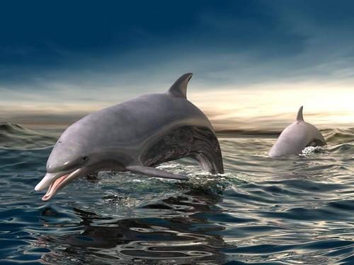 Delfines nadando