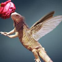 humming-bird_4764c570da0b0