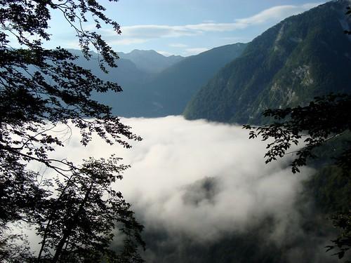 nebbia del mattino