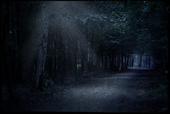 guide me through the night (-justk-) Tags: copyright moon night forest landscapes moonlight afterthought solitudes guideyou lightineventhedarkestnight allmyimagesarecopyrightedallrightsreserveddonotusecopyandeditmyimageswithoutmypermission primevalforestgroups