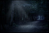 guide me through the night (-justk-) Tags: copyright moon night forest landscapes moonlight afterthought solitudes guideyou lightineventhedarkestnight allmyimagesarecopyrighted©allrightsreserveddonotusecopyandeditmyimageswithoutmypermission primevalforestgroups