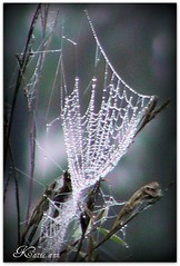 Sparkling jewels (♥ Katie ann. Off more than on.) Tags: inspire cffa abigfave theperfectphotographer thelightpainterssociety dragondaggeraward