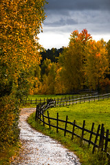 At The Farm (Joaaso) Tags: road autumn trees fall nature leaves rain oslo norway forest canon fence eos norge leaf catchycolours farm natur scenic skog sti vei gjerde regn hst lightroom trr holmlia flickrexplore naturepoetry sndresgrd canoneos450d canonefs55250mmf456is myfocusphotocontestwinner